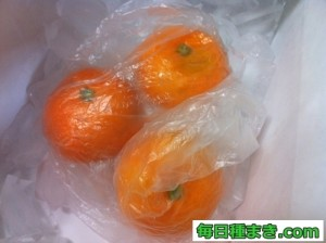 冷凍みかんの作り方(皮あり)01