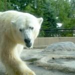 札幌から旭山動物園までのアクセスは?所要時間は?