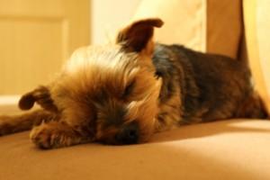 仕事 眠い 対策